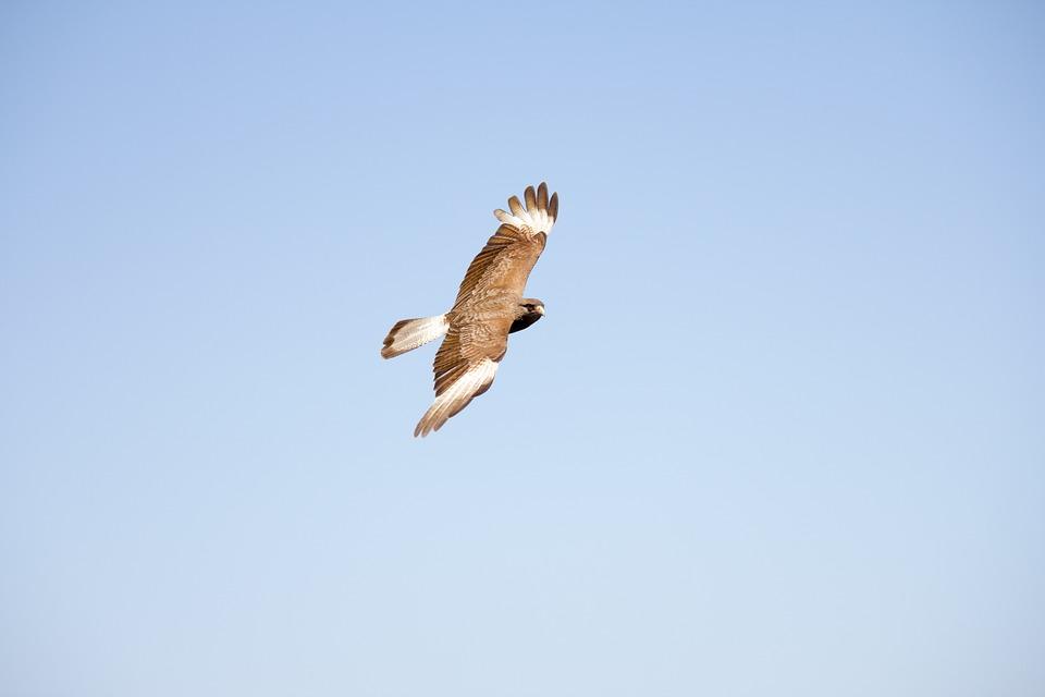 Animals, Bird, Fly, Freedom, Nature