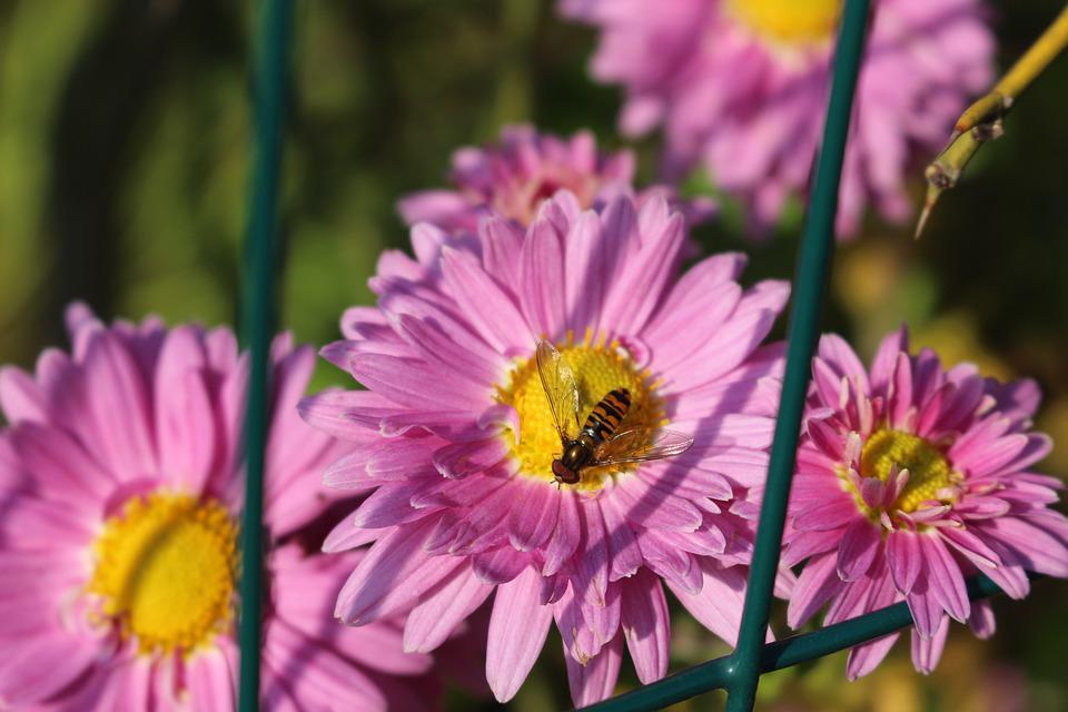 Pink, Fly, Insect, Nature, Plant, Flower, Flora