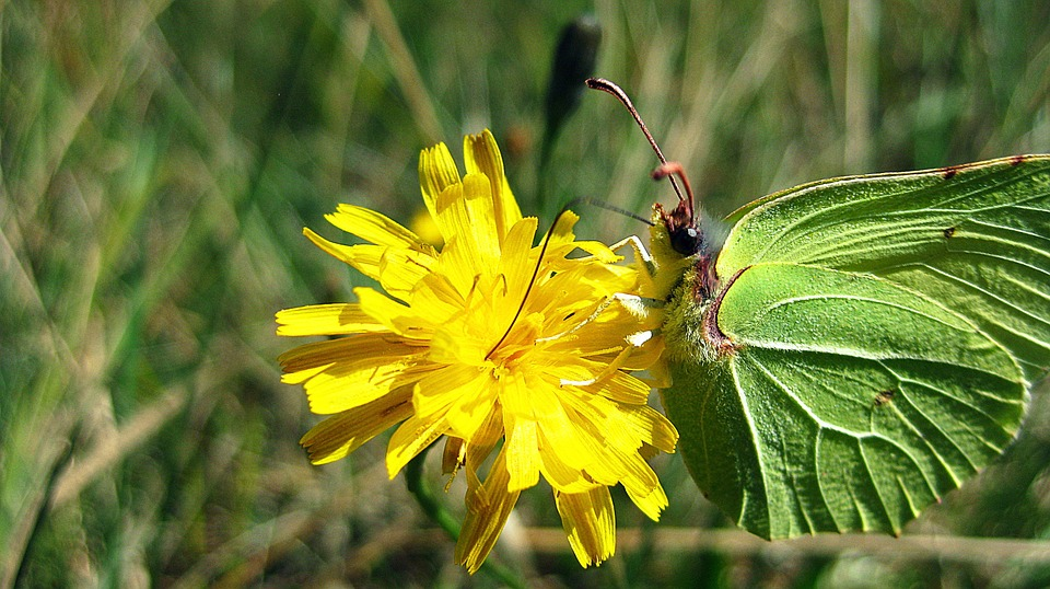Fly, Floral, Plant, Natural, Blossom, Bloom, Petal