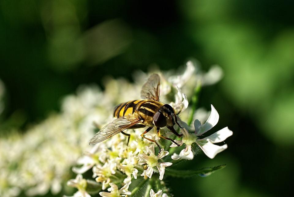 Macro, Bug, Nature, Wings, Fly, Flower, Leaves, Sheet