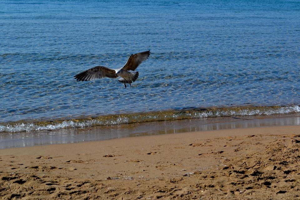 Seagull, Fly, Sky, Flying, Nature, Animal, Birds