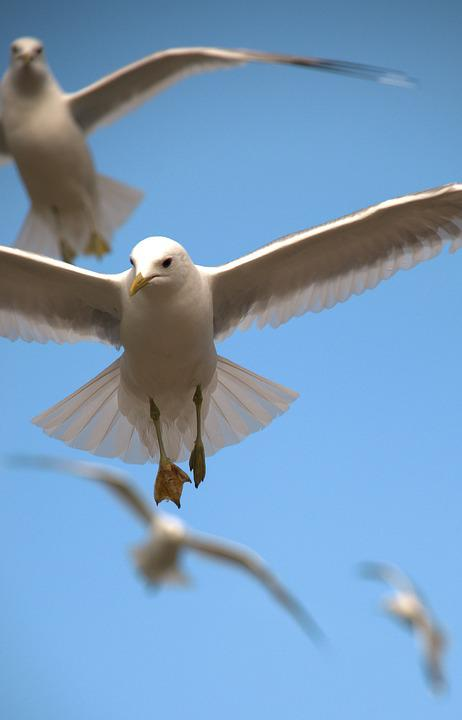 free photo fly sky birds flight animal white flying nature max pixel