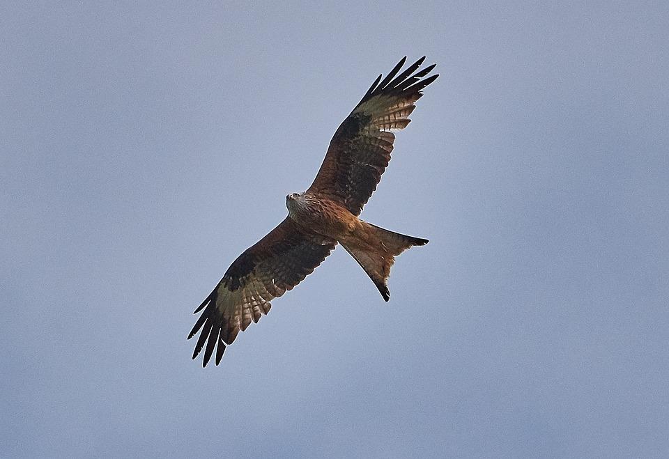 Millan, Bird, Fly, Birds, Plumage, Sky, Wing, Nature