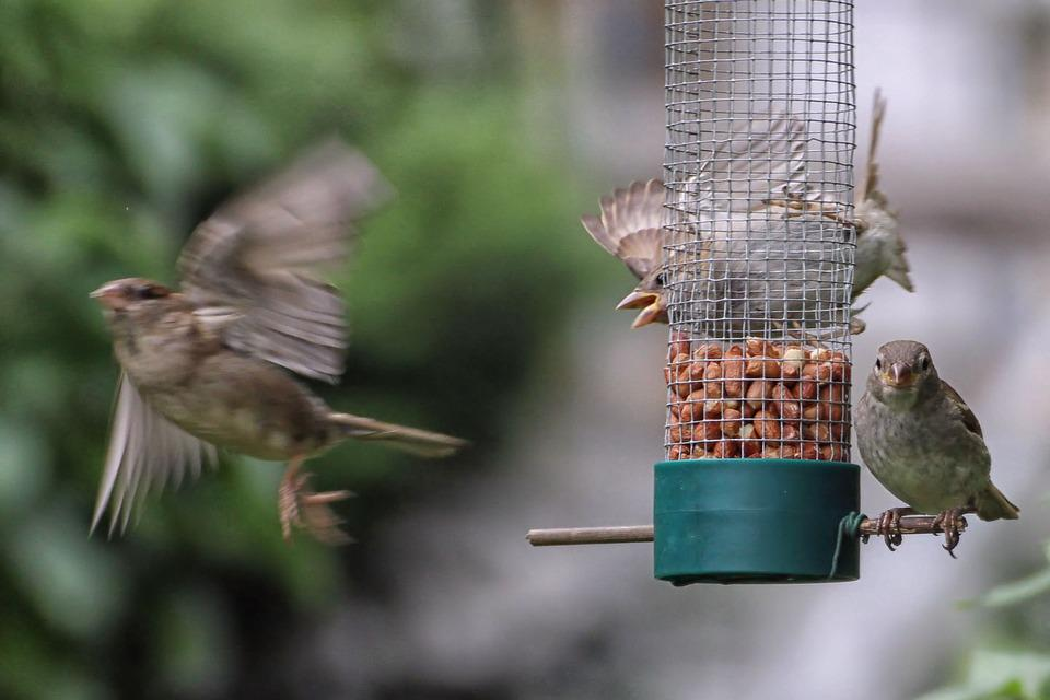 Sparrows, Treat Dispenser, Fly, Out Of Focus