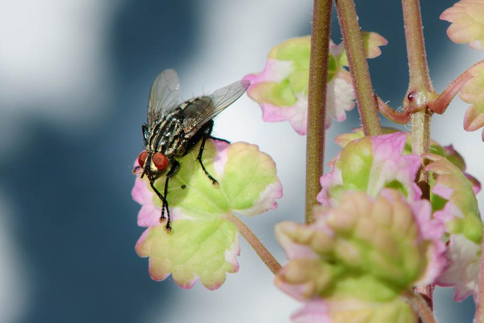 Housefly, Fly, Macro, Insect, Close, Wing