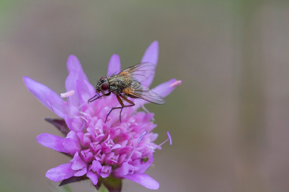 Fly, Flower, Insect, Nature, Plants, Winged Insect