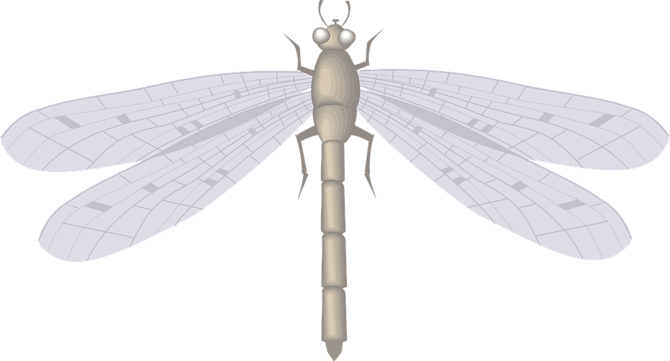Dragon, Fly, Large, Wings, Insect