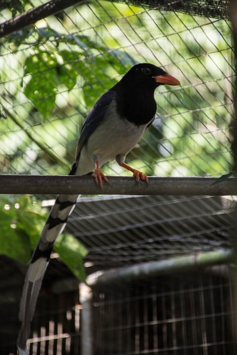 Birds, Nature, Flying Birds, Animals, Dove, Parrot