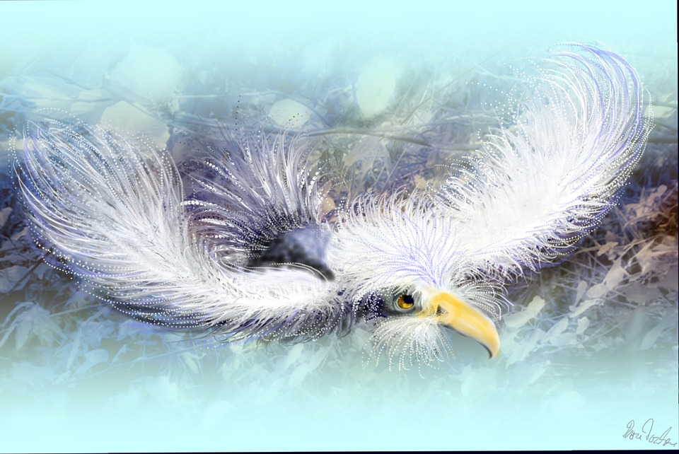 Feather, Bird, Animal, Flying, Animal World, Sky, Birds