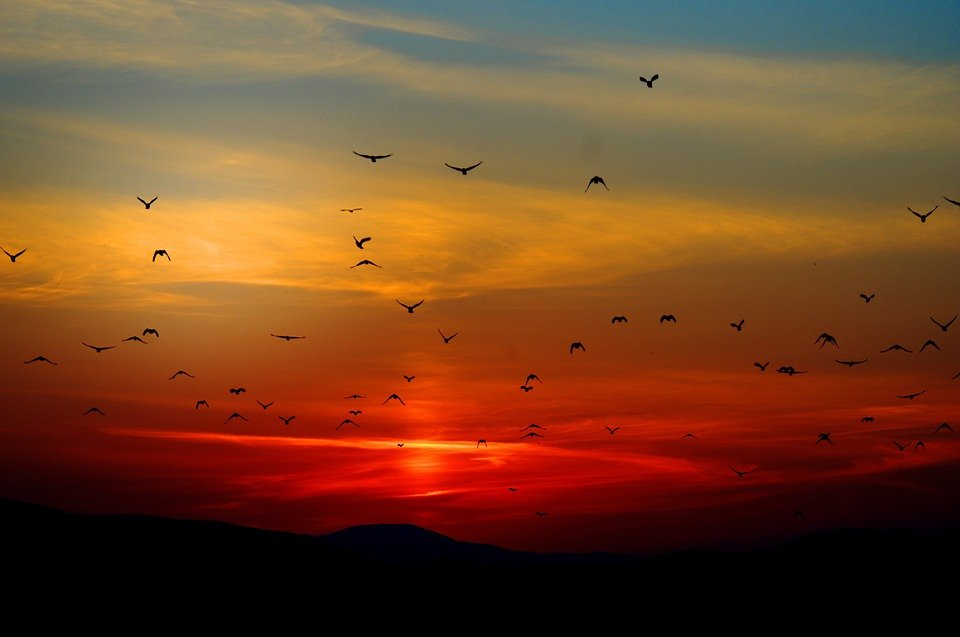 Sunset, Birds, Flying, Sky, Colorful, Colors, Orange