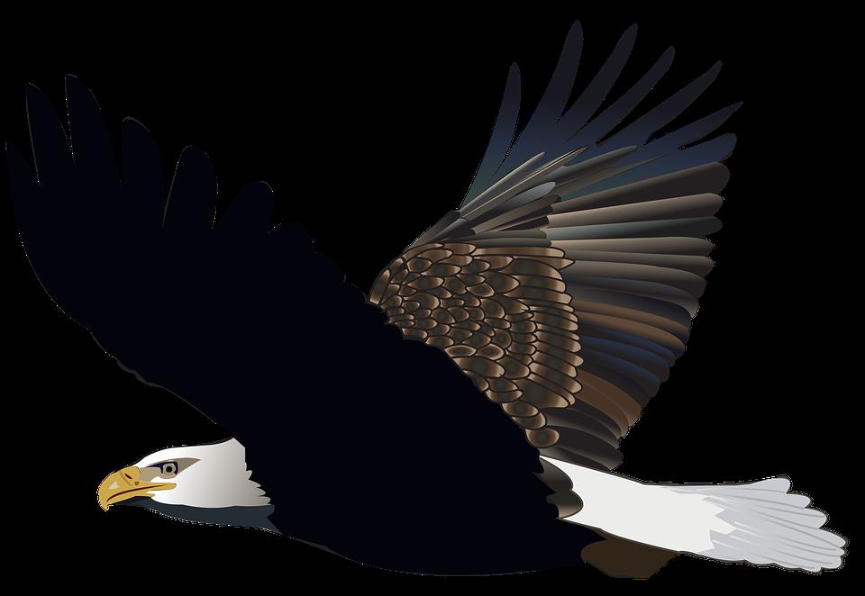 Free photo flying eagle feather nature american bird flight max bird eagle flying feather nature american flight altavistaventures Images