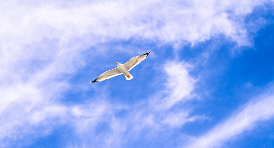 Gull, Animal, Flying, Wings, Freedom, Bird, Sky