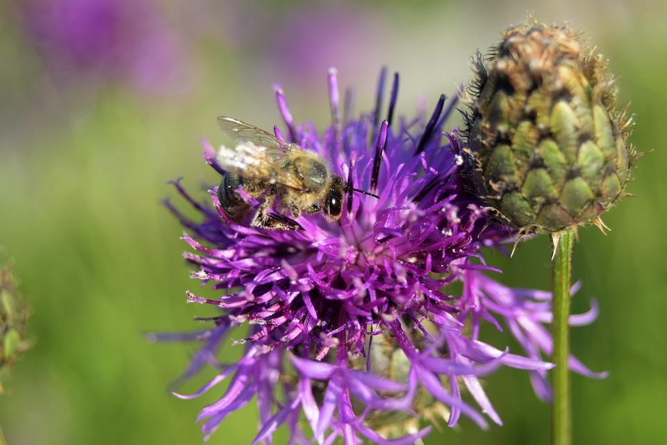Bee, Flower, Nature, Flying Insect, Summer