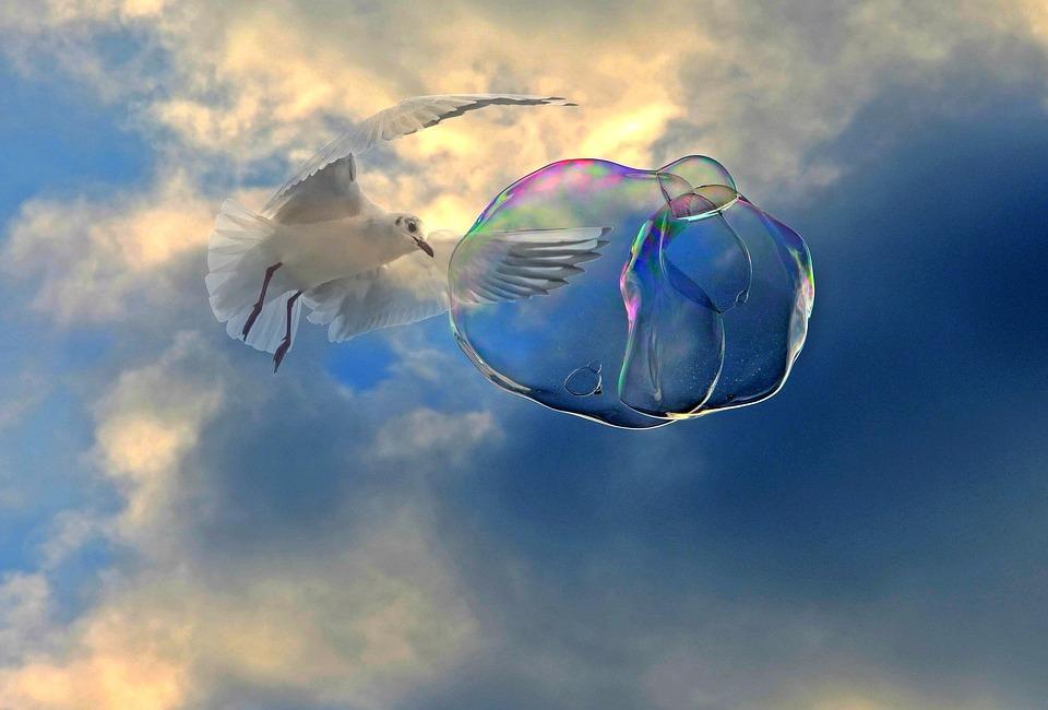Soap Bubble, Flying, Seagull, Bird, Float, Ease, Sky