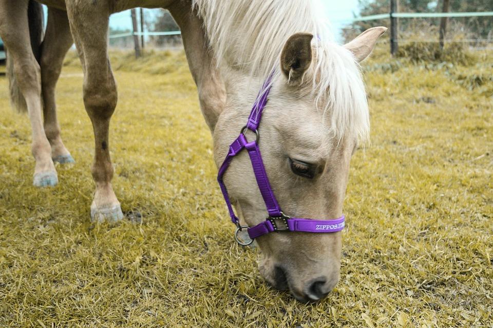 Horse, Mare, Quarter Horse, Dun, Pasture, Foal