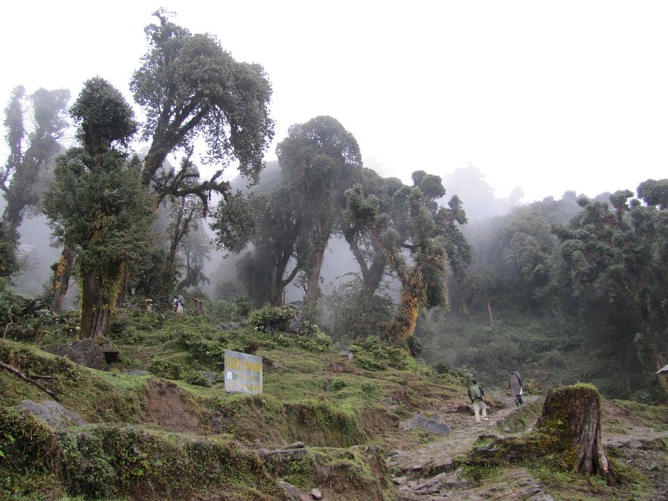 Fog, Forest, Trees, Nature, Foam, Green, Landscape