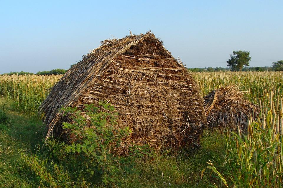 Fodder Barn, Crop Residue, Pearl Millet, Bajra