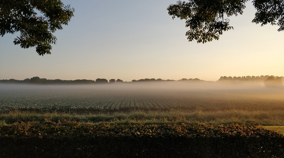 Fog, Air, Pasture, Mist, Misty, Nature, Dutch Landscape