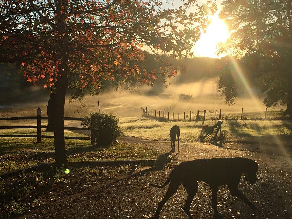 Dog, Sunrise, Morning, Fog, Mist, Summer, Pet, Animal