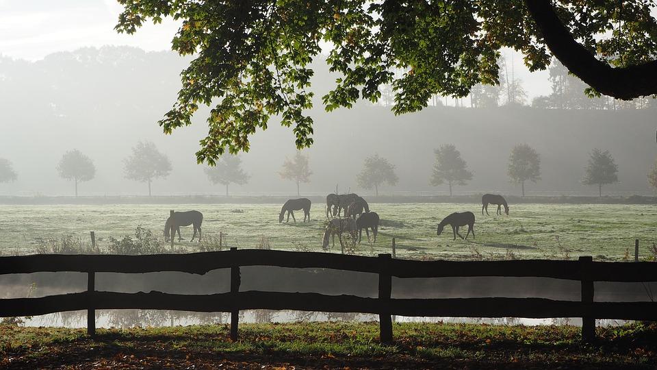 Fog, Back Light, Autumn, Mood, Autumn Morning, Sunlight