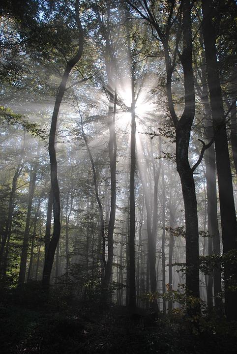 Back Light, Beech Wood, Spring, Fog, Green, Beech