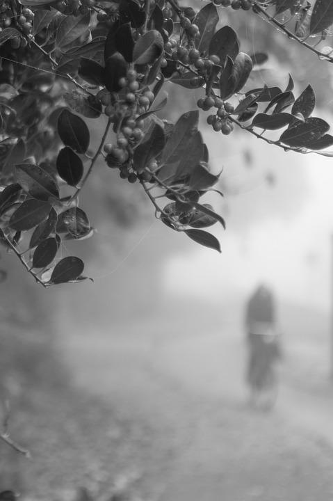 Biking, Cyclist, Haze, Fog, Mist, Ghost, Branch, Leave