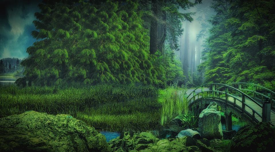 Forest, Nature, Bridge, Green, Fog, Green Nature
