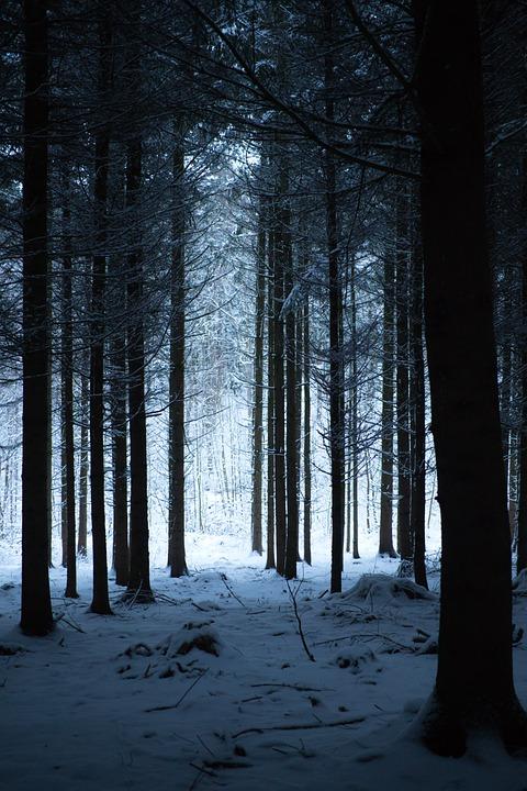 Forest, Winter, Nature, Landscape, Trees, Fog, Cold
