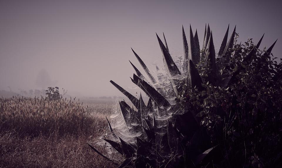 Dawn, Fog, Spider Webs, Cactus, Cold, Dark, Nature