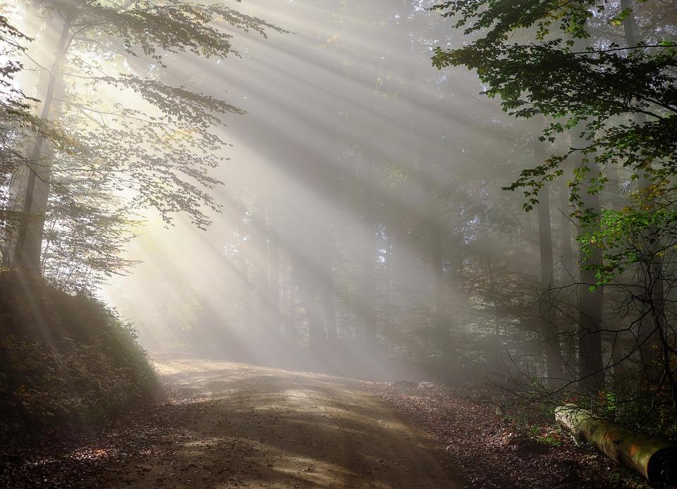 Dirt Road, Sunbeams, Forest, Fog, Foggy Morning, Haze