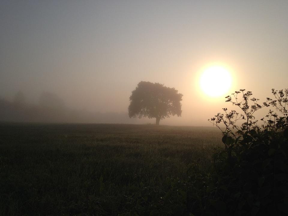 Morning Sun, Fog, Nature, Mood, Foggy, Sunrise