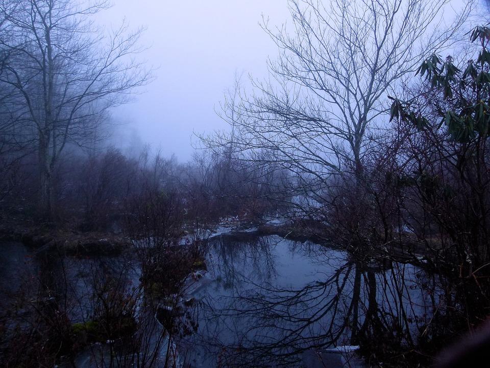 Fog, Foggy, Wetland, Swamp, Promised Land State Park