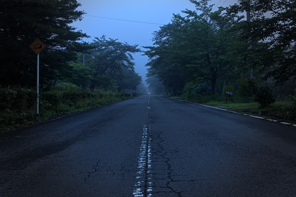 Road, Street, Forest, Trees, Fog, Foggy, Misty