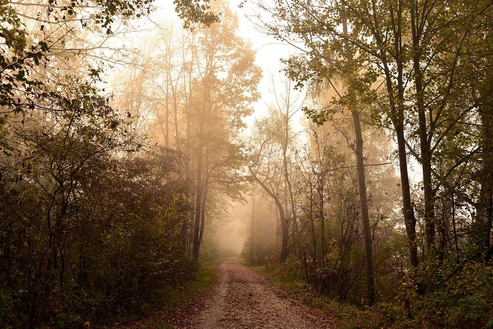 Forest, Haze, Landscape, Fog, Nature, Trees, Autumn