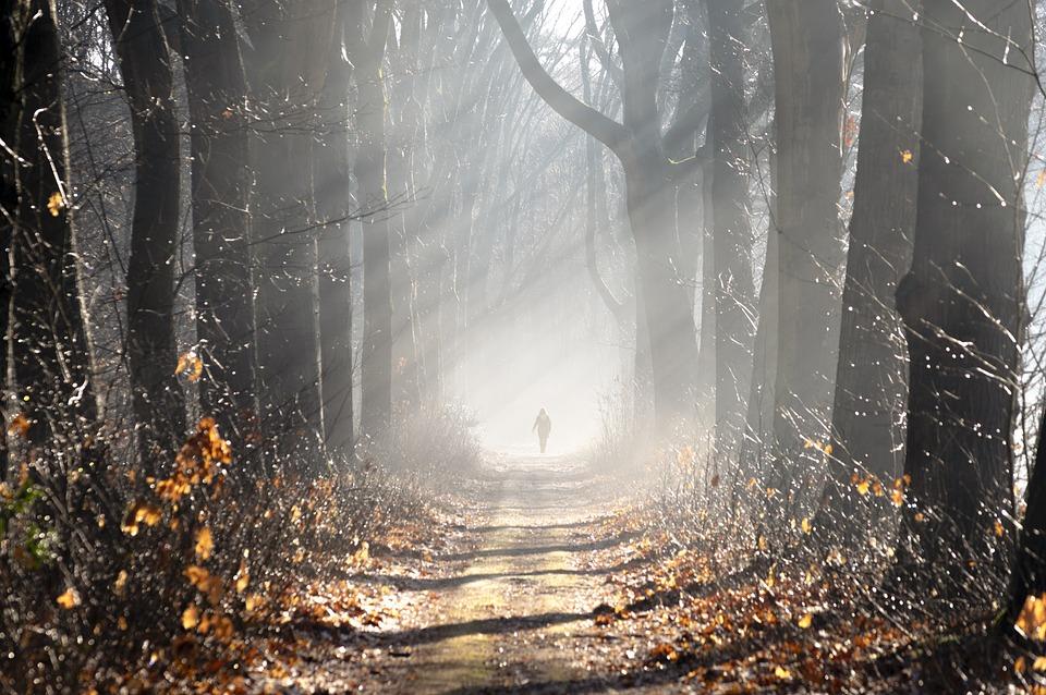Fog, Forest, Avenue, Trees, Landscape, Vote, Hiking
