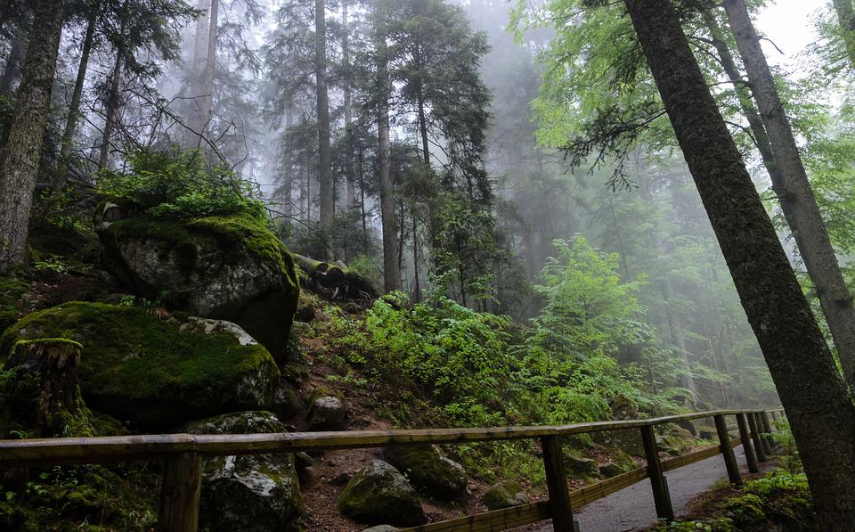 Triberg, Black Forest, Germany, Forest, Fog, Nature