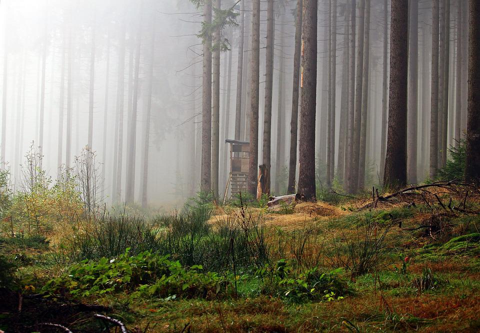 Fog, Forest, Perch, Hunter Seat, Hunter Was, Nature