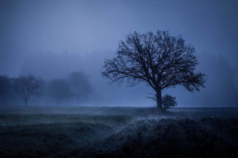 Tree, Fog, Mood, Landscape, Autumn, Meadow, Mysterious