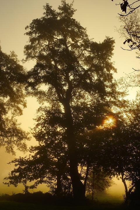 Autumn, Morning, Fog, Back Light, Mood, Cold, Landscape