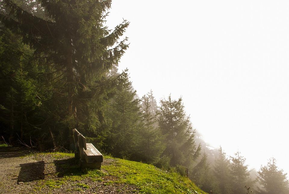 Autumn, Fog, Landscape, Mood, Bank, Forest