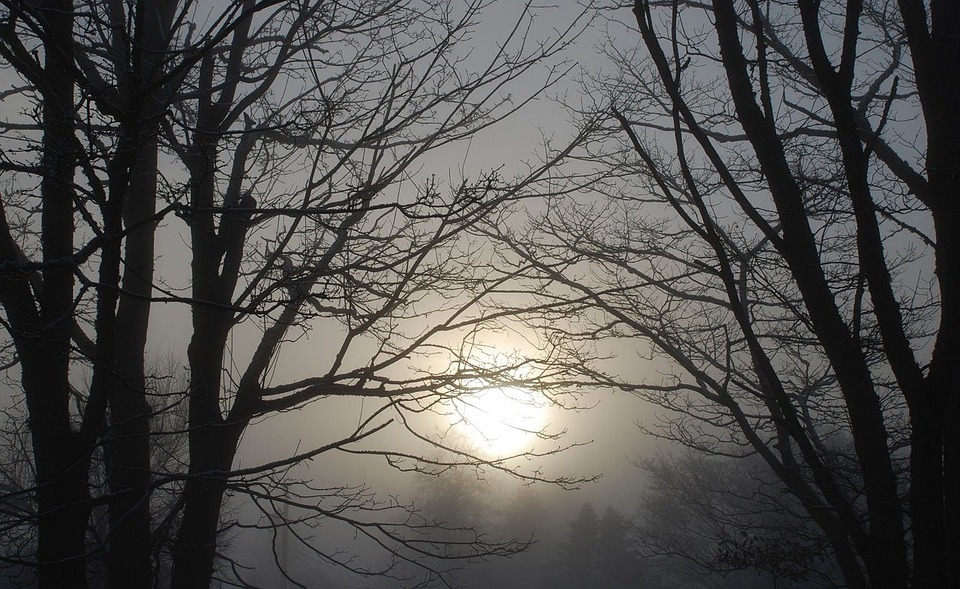 Winter, Mist, Foggy, Haze, Sunrise, Dawn, Morning, Fog
