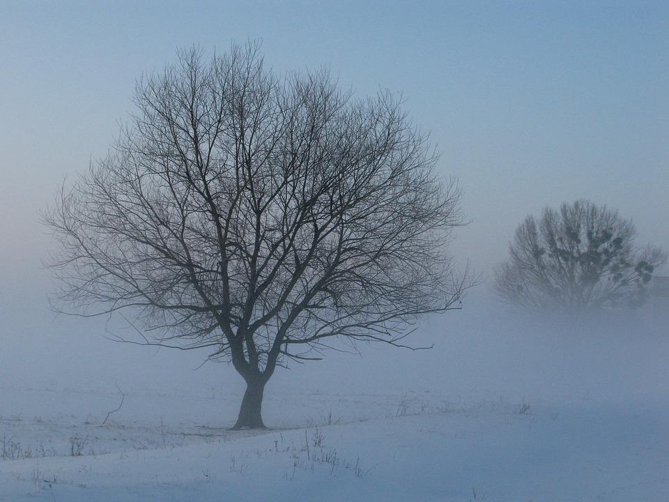 Winter, Fog, Mysterious