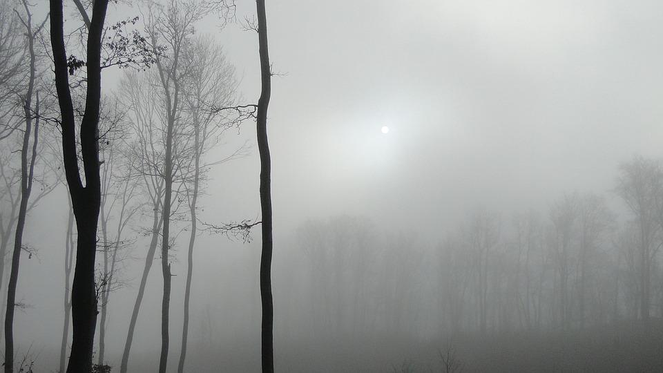 Wood, Fog, Mystic, Nature, Landscape, Beech Mountain