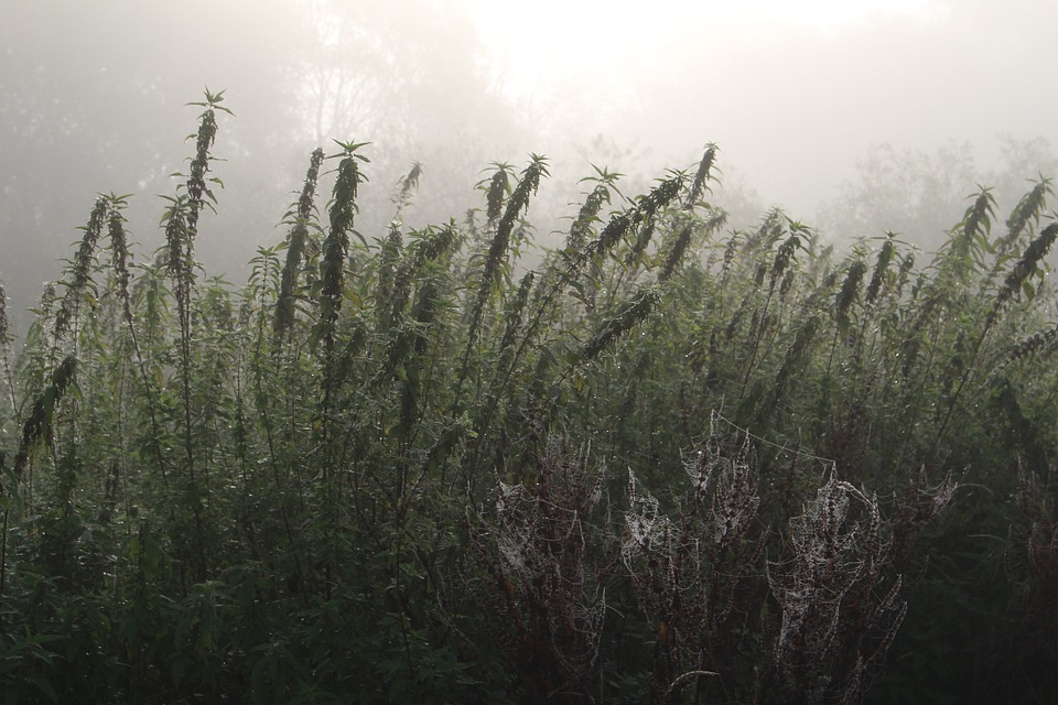 Fog, Plant, Nature, Autumn, Cold, Mood, Atmosphere