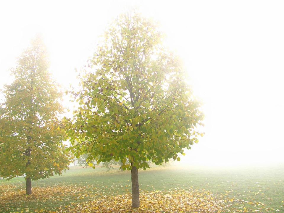 Tree, Fog, Park, Autumn Leaves, Golden Autumn, Colors