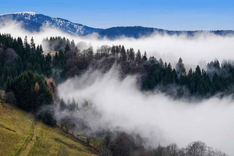 Fog, Rising Fog, Steam, Silent, Mysterious, Atmospheric