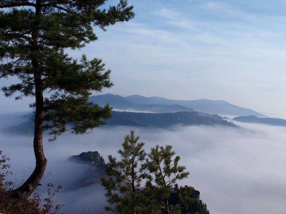Fog, Pine, Slovakia