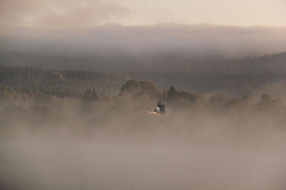 Fog, Landscape, Dawn, Waters, Stork, Animal, Bird