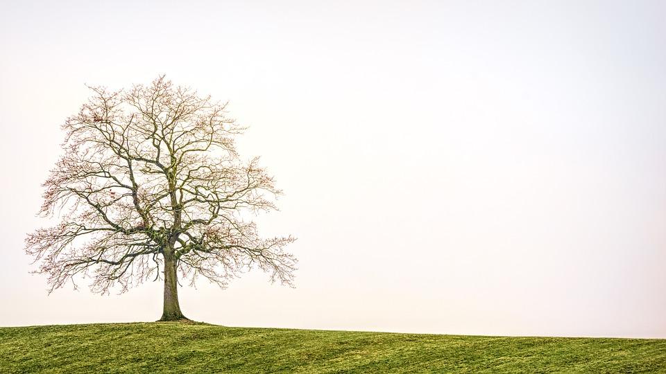 Tree, Nature, Landscape, Alone, Fog, Structure, Hill