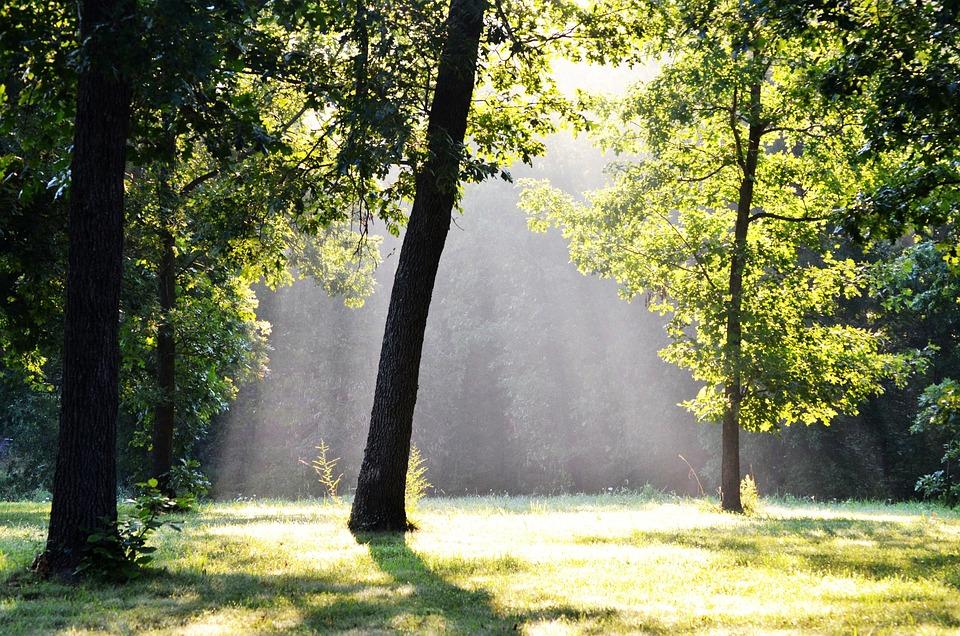 Trees, Fog, Forest, Sunbeams, Misty, Morning, Woods